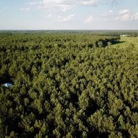 9.5 Acres of Hunting and Timber Land For Sale in Gates County NC!