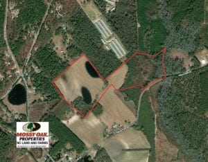 70 Acres of Farm and Timber Land For Sale in Scotland County NC!
