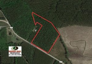 UNDER CONTRACT!  9.5 Acres of Hunting and Timber Land For Sale in Gates County NC!