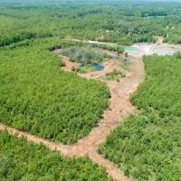 SOLD!  103.88 Acres of Hunting and Timber Land For Sale in Brunswick County NC!