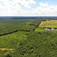 SOLD!!  83 Acres of Timber and Hunting Land For Sale in Warren County NC!