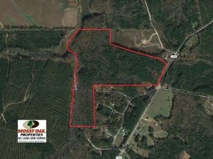 UNDER CONTRACT!!  83 Acres of Timber and Hunting Land For Sale in Warren County NC!