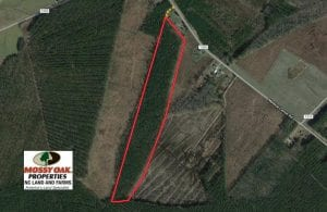 UNDER CONTRACT!  38 Acres of Hunting and Timber Land for Sale in Gates County NC!