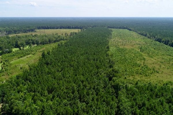 REDUCED!  38 Acres of Hunting and Timber Land for Sale in Gates County NC!