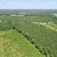 SOLD!  38 Acres of Hunting and Timber Land for Sale in Gates County NC!