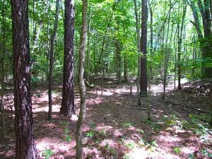 SOLD!!  6 Acres of Mature Timber Land for Sale in  Surry County VA!