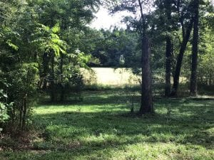 SOLD!!   32.01 Acres of Hunting and Timber Land for Sale in Bladen County NC!
