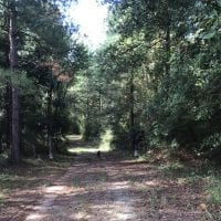 UNDER CONTRACT!!   32.01 Acres of Hunting and Timber Land for Sale in Bladen County NC!