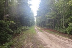 SOLD!!  100 Acres of Hunting Land For sale in Surry County VA!