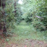 UNDER CONTRACT!!  100 Acres of Hunting Land For sale in Surry County VA!