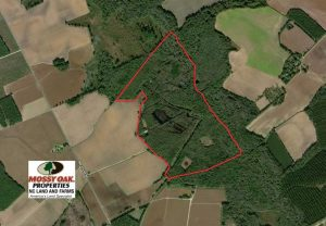 SOLD!!  174 Acres of Hunting Land For Sale in Dillon County SC!