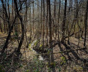 SOLD!!  20.26 Acres of Hunting and Recreational Land For Sale in Halifax VA!