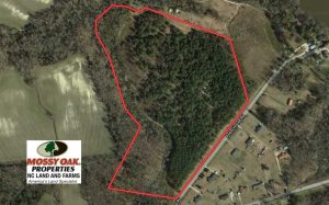 36 Acres of  Timber Land For Sale in Pitt County NC!