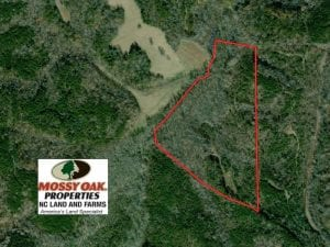 SOLD!  45 Acres of Prime Hunting Land For Sale in Caswell County NC!