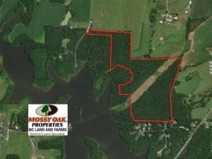 61 Acres of Investment Timber Land For Sale in Randolph County NC!
