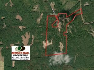 112 Acres of Hunting Land with Lodge and Investment Timber For Sale in Person County NC!