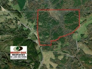 156 Acres of Hunting and Investment Timber Land For Sale in Caswell County NC!