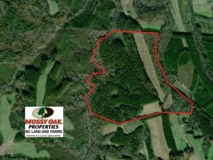 89 Acres of Farm Hunting and Investment Timber Land For Sale in Caswell County NC!