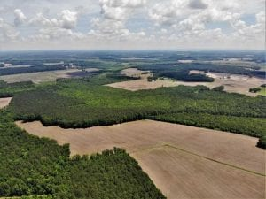 245 Acres of Hunting Land with Cabin for Sale in Gates County NC!