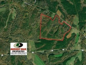 52.53 Acres of Hunting Land For Sale in Rockingham County NC!