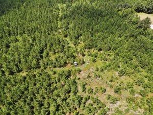 SOLD!!  105 Acres of Hunting and Timber Land For Sale in Northampton County NC!