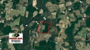 222 Acres of Farm and Hunting Land For Sale in Isle of Wight County VA!