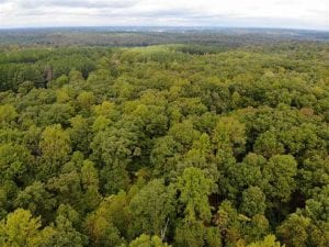 SOLD!! 95.7 Acres of Timber Land For Sale in Buckingham County VA!