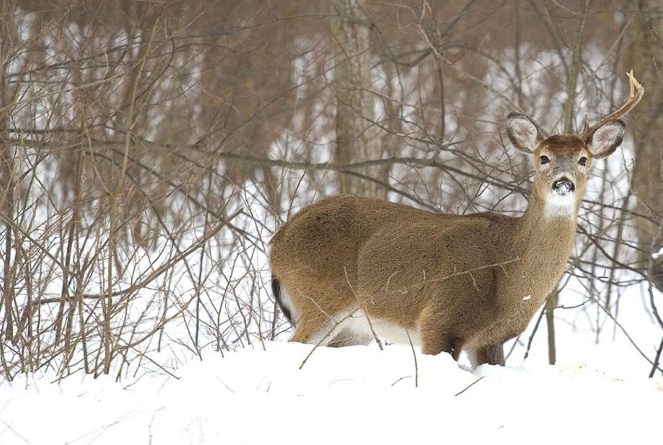 FINDING SHED ANTLERS: TOP 3 LOCATIONS
