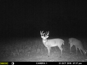 A trail camera photo taken days before he was harvested