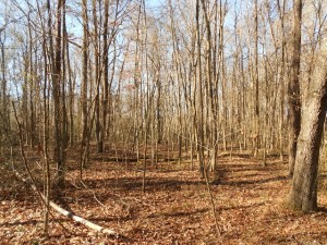 A hardwood bottom in Northampton County