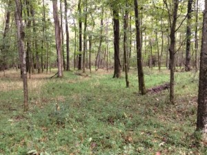 A hardwood bottom where numerous whitetails were seen