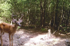 Mineral sites are great places to set up trail cameras