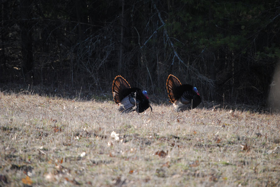Scouting For Turkey Season Success