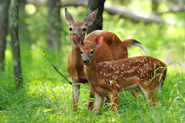 3 Ways To Give This Year's Fawns a Head Start