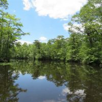 UNDER CONTRACT!  65 Acres of Hunting and Residential Land For Sale in Horry County SC!