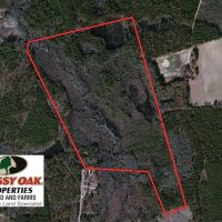 UNDER CONTRACT!  99 Acres of Hunting Land For Sale in Marlboro County SC!
