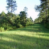 REDUCED!  62.82 Acres of Hunting and Timber Land for Sale in Pender County NC!