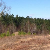 8 Acres of Hunting Land for Sale in Halifax County VA!
