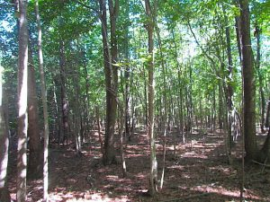 SOLD!!  8.62 Acres of Hunting and Residential Land For Sale in Lunenburg County VA!