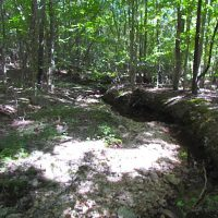 8.62 Acres of Hunting and Residential Land For Sale in Lunenburg County VA!
