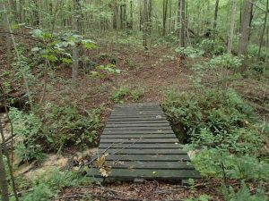 32.97 Acres of Hunting Land For Sale in Nash and Franklin County NC!