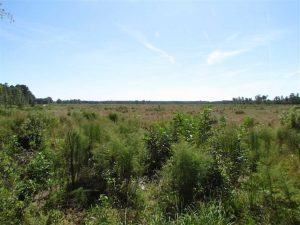 SOLD!  224 Acres of Timber and Farm Land in Suffolk County VA!