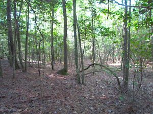 SOLD!!  17 Acres of Timber and Farm Land in Southampton County VA!