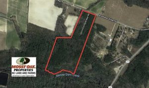 REDUCED!  39 Acres of Timber and Hunting Land For Sale in Cumberland County NC!