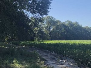 SOLD!!  112 Acres of Hunting Land For Sale in Cumberland County NC!