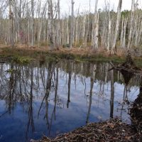 UNDER CONTRACT!  70 Acres of Hunting Land for Sale in Southampton County, VA