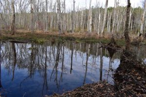 SOLD!  70 Acres of Hunting Land for Sale in Southampton County, VA