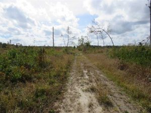 UNDER CONTRACT!!  209.65 Acres of Hunting and Timber Land For Sale in Columbus County NC!
