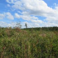 209.65 Acres of Hunting and Timber Land For Sale in Columbus County NC!