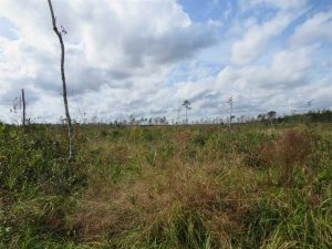 SOLD!!  209.65 Acres of Hunting and Timber Land For Sale in Columbus County NC!